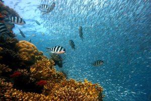 colageno marino hidrolizado